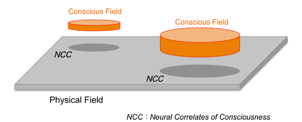 Conscious Field and Physical Field